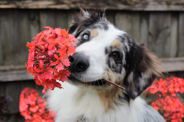 Dog with flowers. Photo via Pixabay.