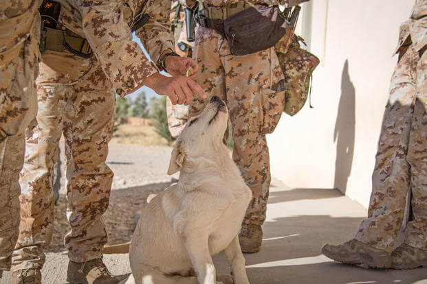 Erby the dog gets some love from Coalition soldiers in the Kurdistan Training Coordination Center (KTCC), near Erbil, Iraq, Oct. 17, 2017. (U.S. Army photo/Tracy McKithern)