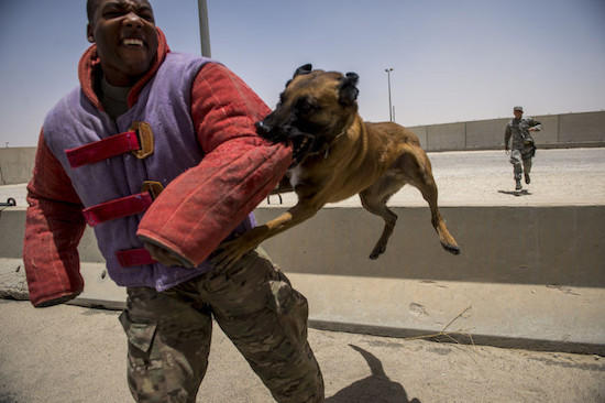 MYTH: MILITARY WORKING DOGS BITE TO KILL