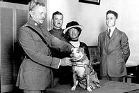 Gen. John Pershing awards Sgt. Stubby with a gold medal in 1921. Stubby served in 17 battles and fought in four major Allied offensives during World War I. (Photo courtesy of Smithsonian Institution's National Museum of American History)